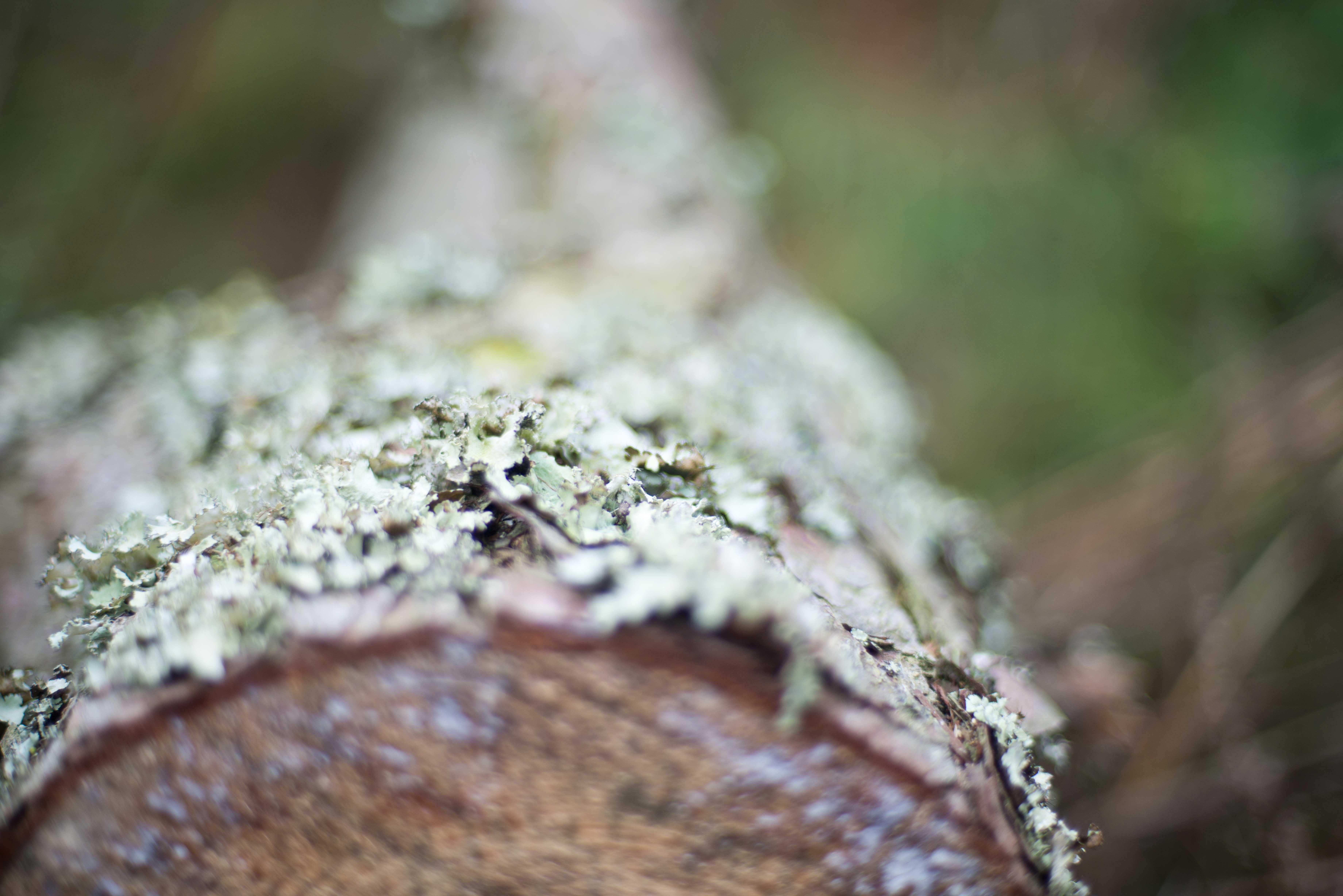 TextureBlog_13